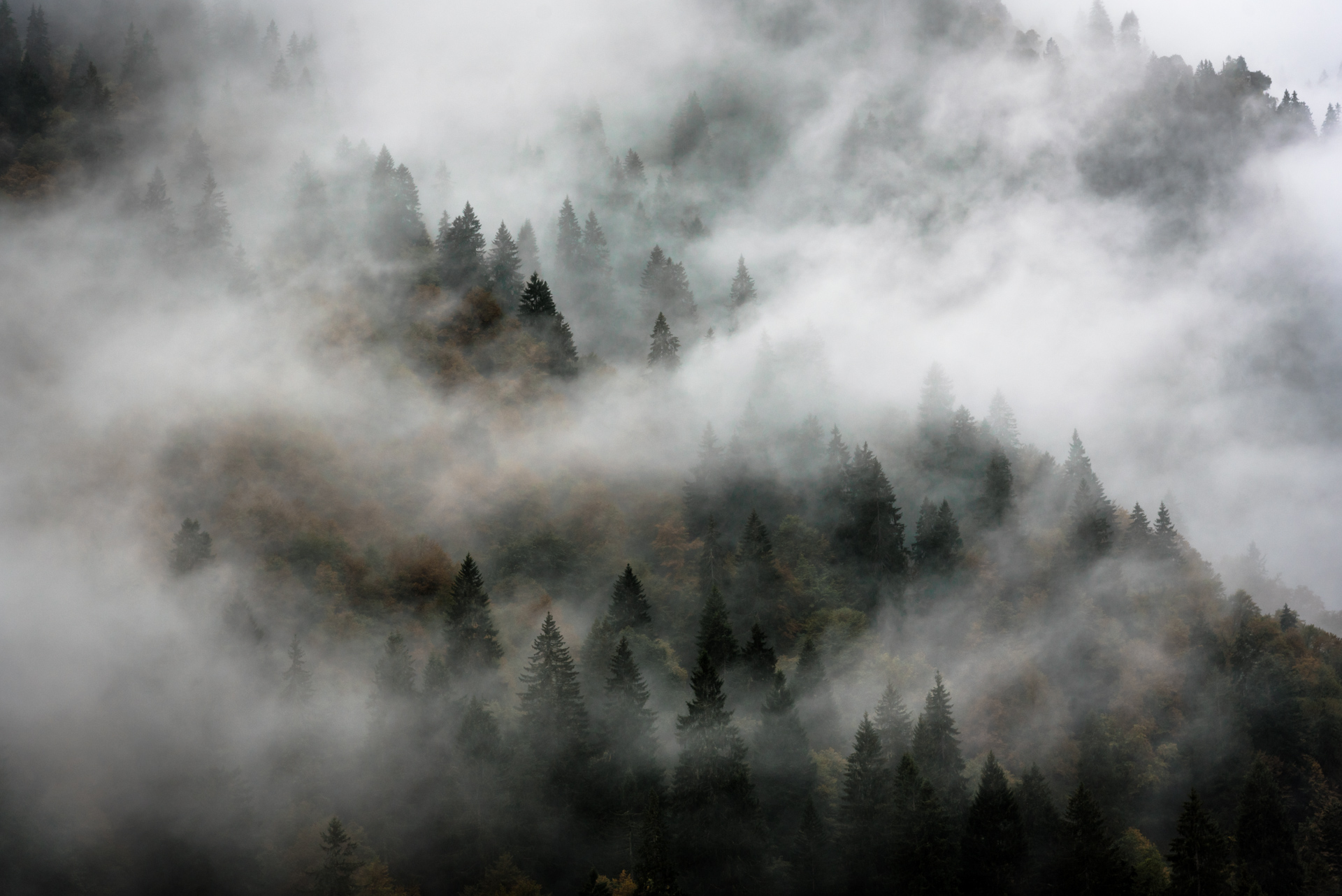 Autumn Forest covered with Fog
