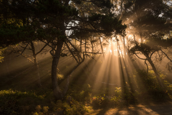 Foggy sunrays in forest