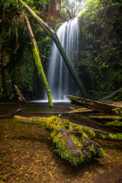Waterfall with forest debris