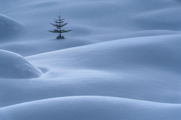 Lone Tree in Snowy Field